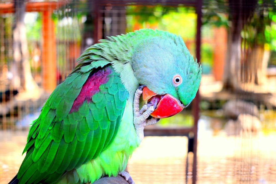 parrot-2853093_960_720