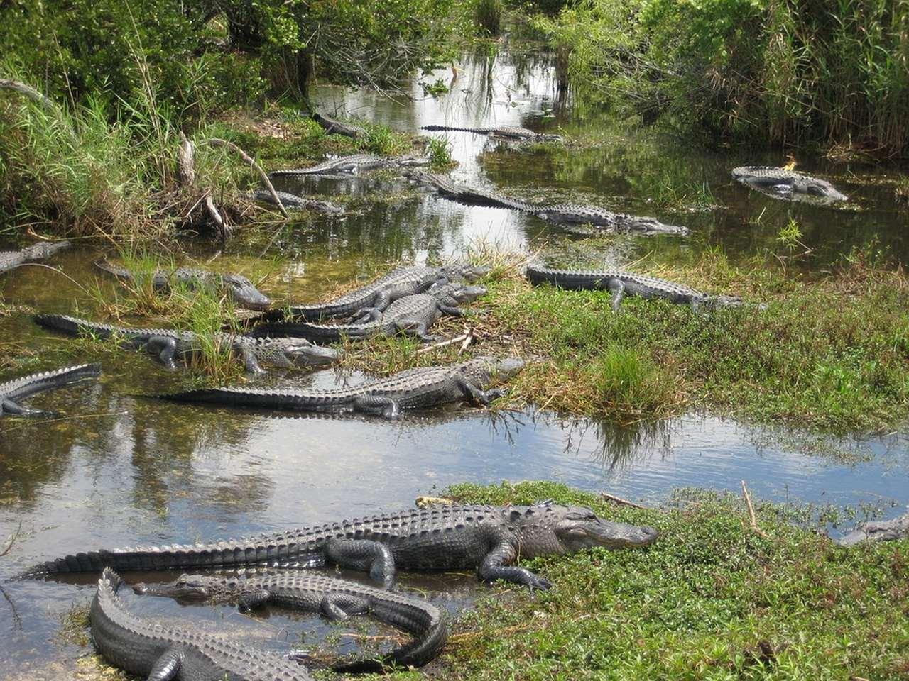 Florida Miami cocodrilos